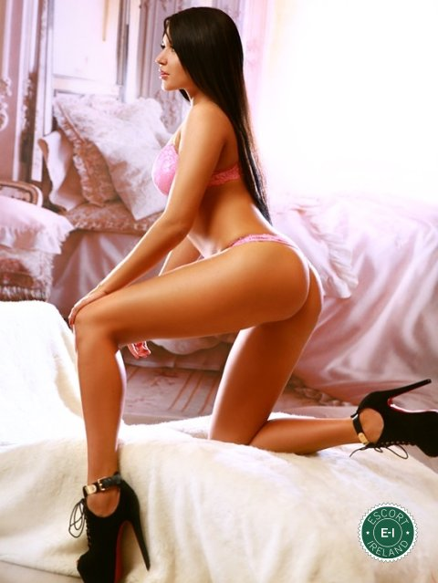 north  escorts escorts online