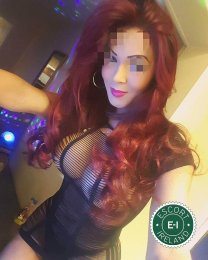 The massage providers in Dublin 2 are superb, and Estrella is near the top of that list. Be a devil and meet them today.