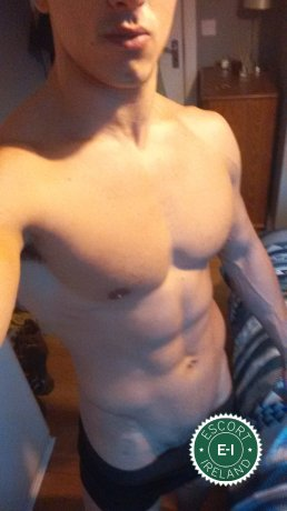 Meet the beautiful Bruno in Dublin 7  with just one phone call