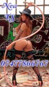Michelle Snaiders TS - escort in Belfast City Centre